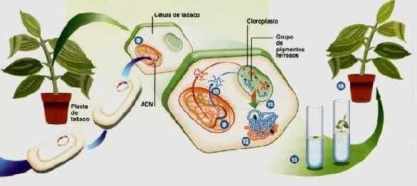 Cap tulo xii gen tica biolog a celular molecular for En 2003 se completo la secuenciacion del humano